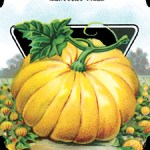 Pumpkin Seed package