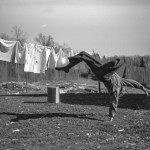 lumberjack doing a cartwheel