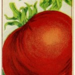 Simple Creamy Tomato Basil Soup