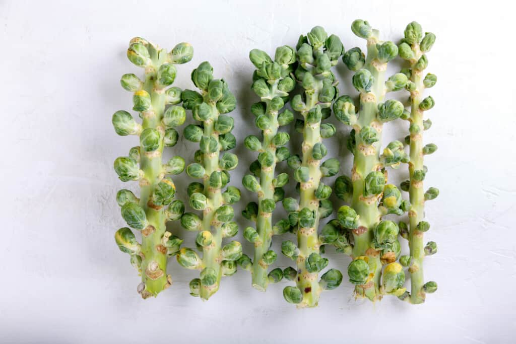 Fresh raw organic brussels sprouts stalks on white background. Top view, flat lay, copy space.