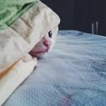 kitty-1785032_640