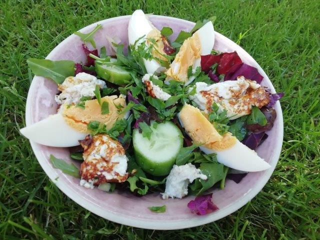 Salade van rode melde en rucola met gebakken geitenkaas