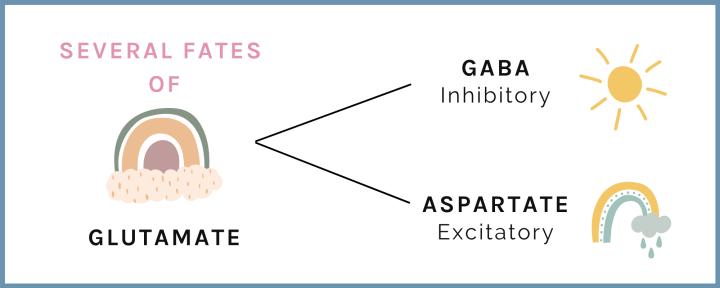 glutamate infographic (gaba and asparatate)