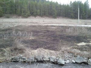 Burning of riparian area at lower Eholt Creek - healthy or unhealthy?