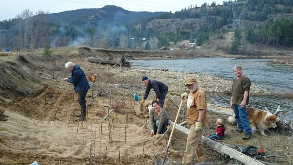 Volunteers plant riparian shrubs and trees this spring at Pines Bible Camp on the Granby River