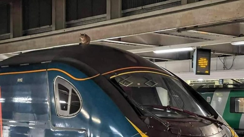 Euston: Cat Delays Train after Climbing on Roof