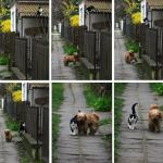 Kutya – macska barátság