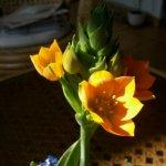 Anyu anyáknapi virágja