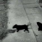 Amikor a macskát elhagyja a kutyalelke
