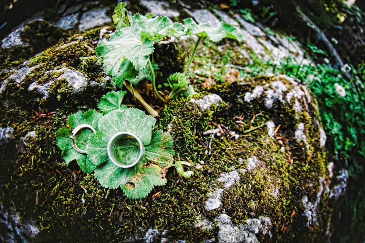 Wedding rings on lichen covered rocks