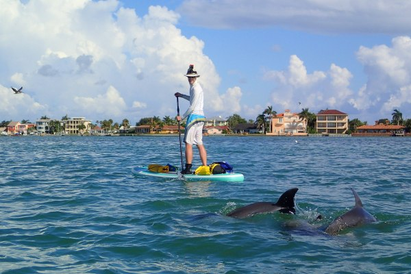 Paddle Boarding with Dolphins Video Cover