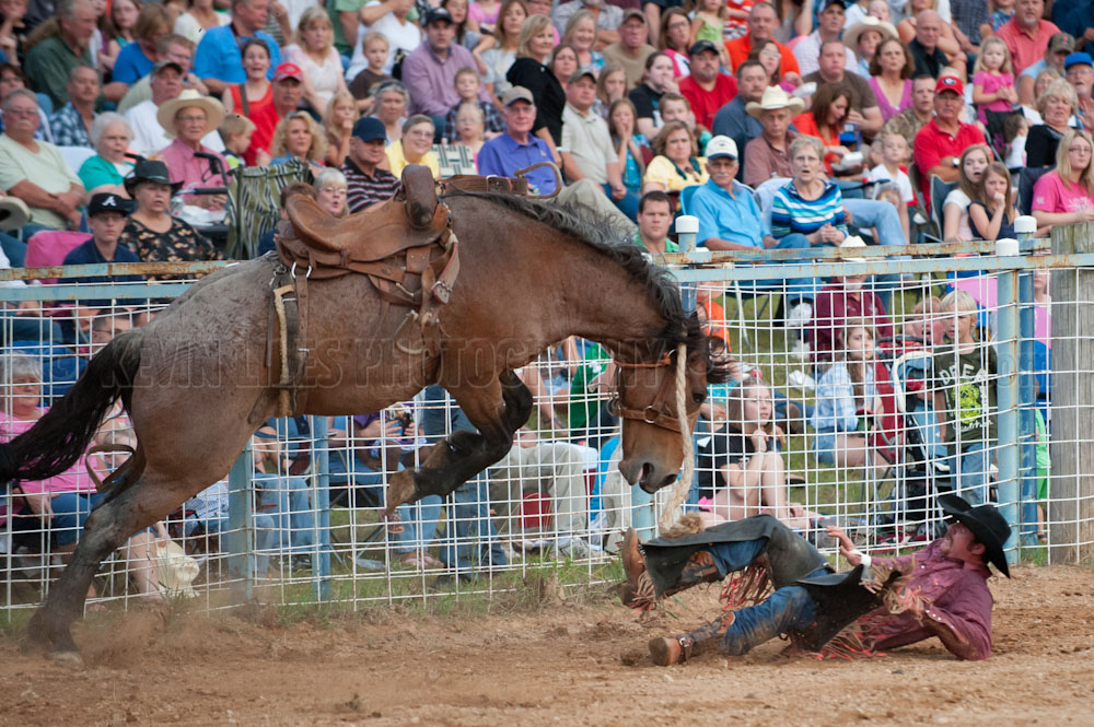 Saddle bronc rider Zaine Seales tries to get out of the way of angry horse at the Shady Dale Rodeo.