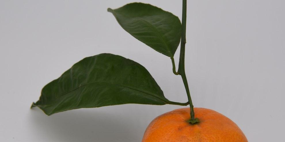 Still Life (Orange with Leaves).