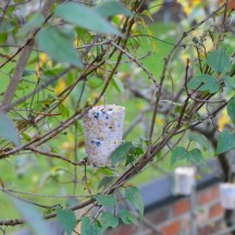 picture of homemade bird feeder