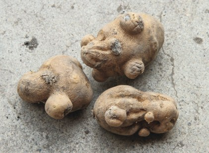 Weird Potatos