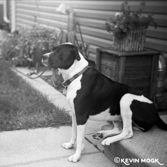 Dog sitting on a step