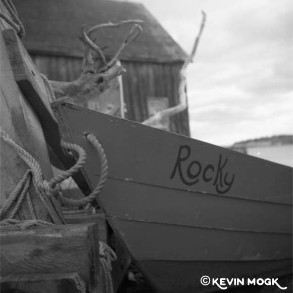 Rocky the Dory Image 01