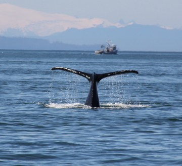 July 31, 2013 Whale