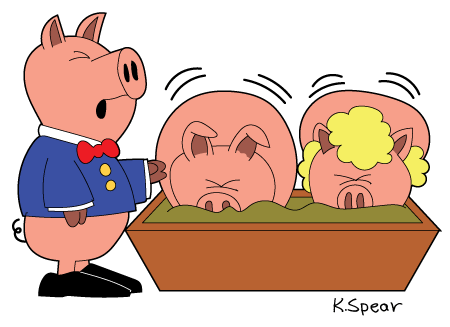 Featured image of three pigs. One is a waiter and two are at a trough