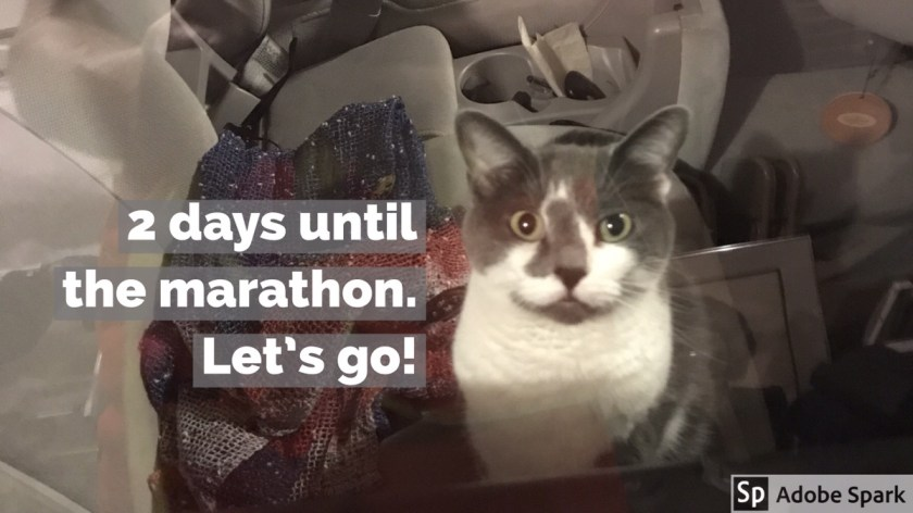 "Cat in a car, staring at the viewer. The caption says, ""2 days until the marathon. Let's go!"