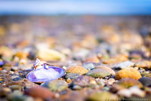 Here's a photo of a shell on the beach with a very shallow depth of field, resulting in lots of bokeh.