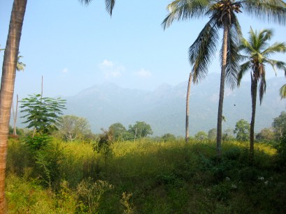 The Nilgiri Hills.