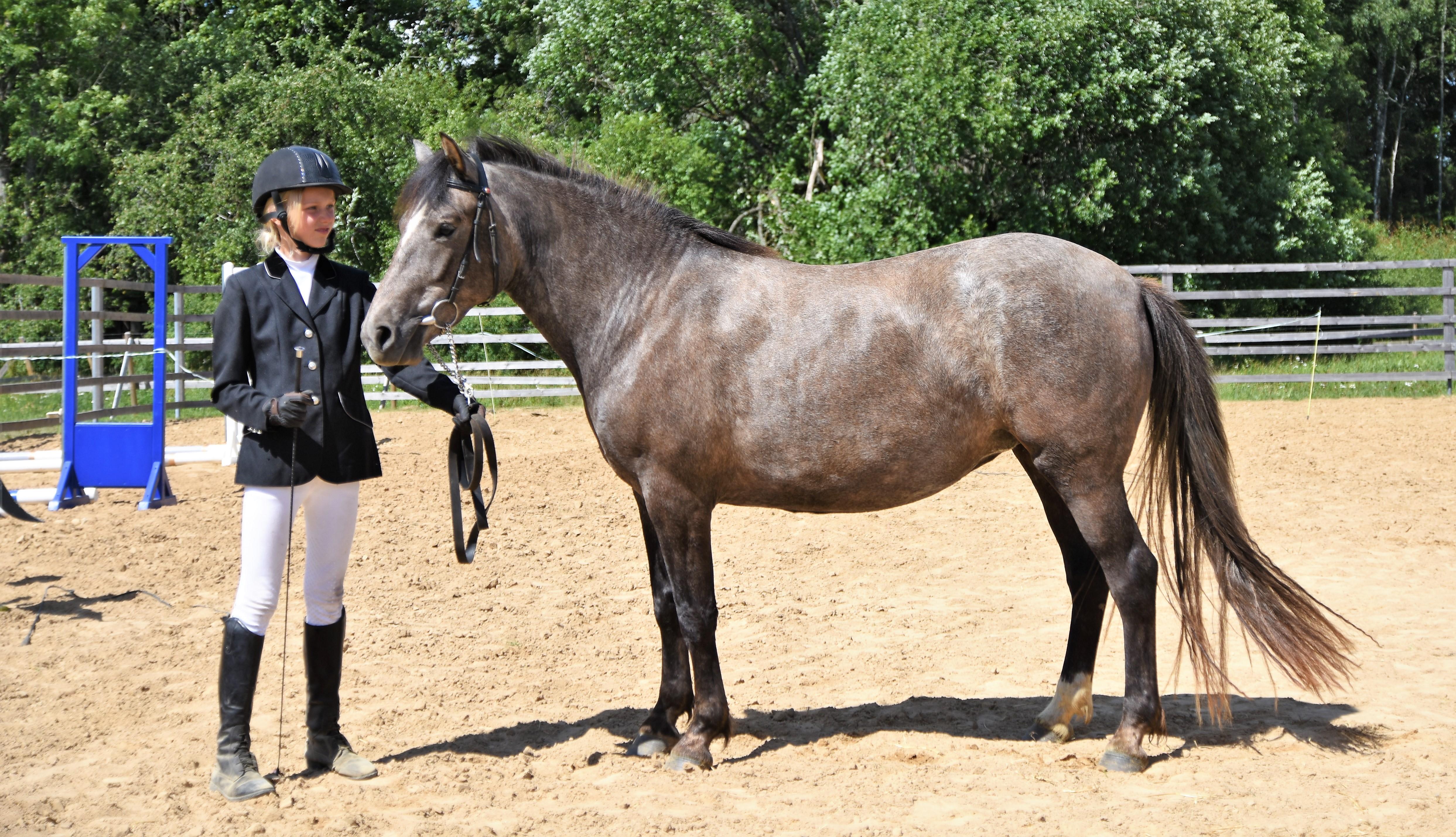 Eesti hobune – Leiki