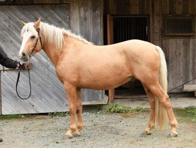 Eesti hobune Trühvel 2 aastane (2017)