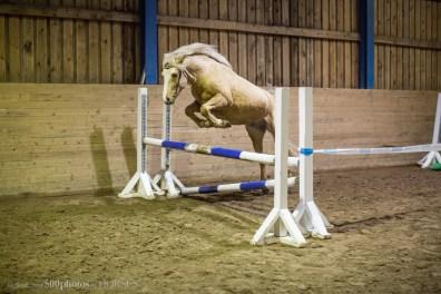 Eesti hobune Trühvel (2017)