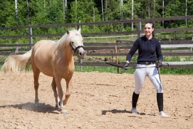 Eesti hobune Tihvani 3 aastane (2018)