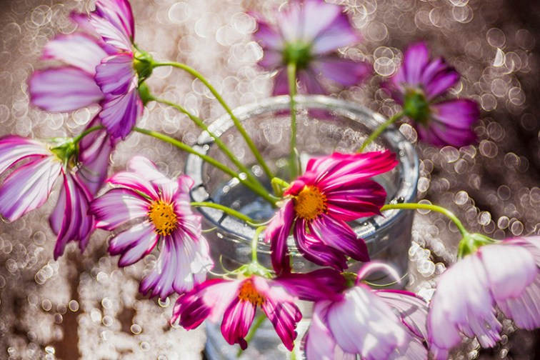 spring flowers bokehlicious