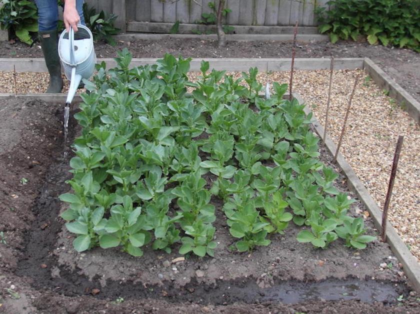 Weatherproof Your Plot Gullies