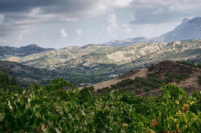 Cretan wine, Mantilari Plakoyra Vineyard