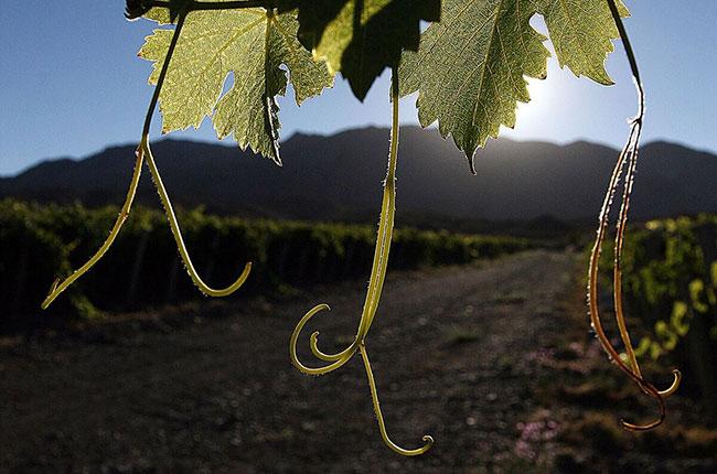 Argentinean winemakers