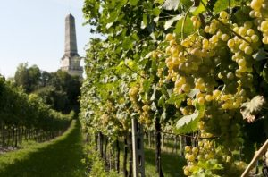 Custoza grape varieties