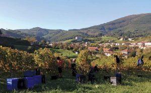 Spain winemakers