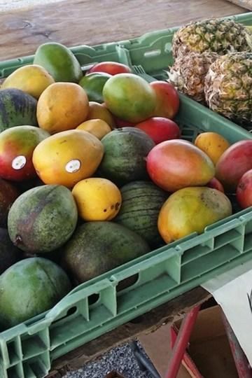 Produce at Daytona Beach Farmers Market