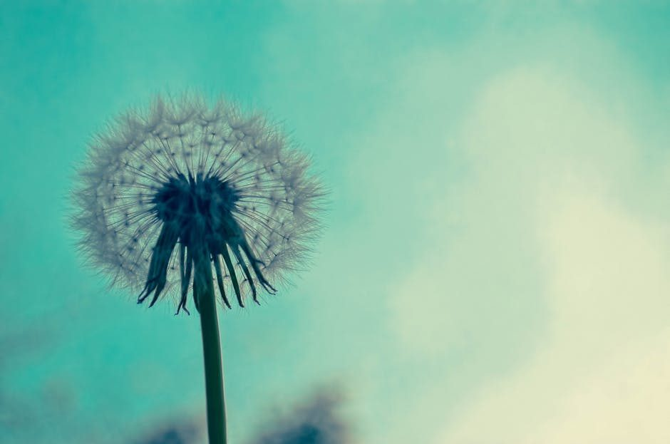meditation, mindfulness, hypnosis