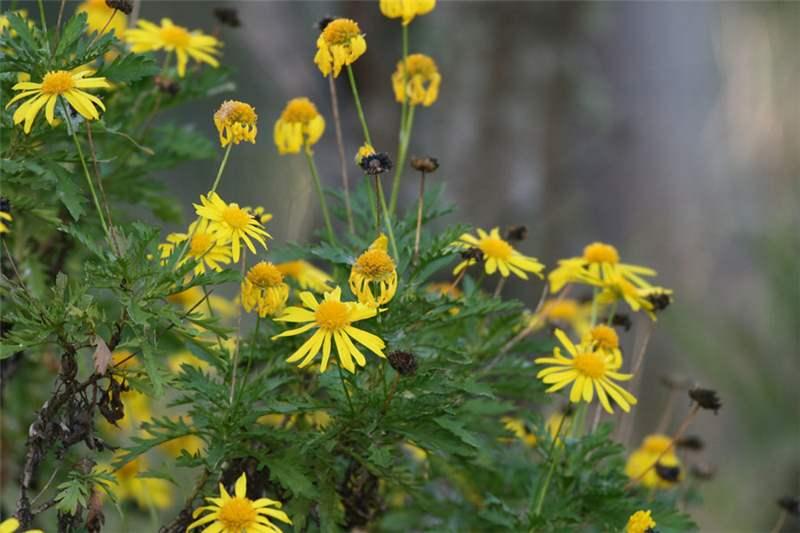 Yellow Leaf Shrub