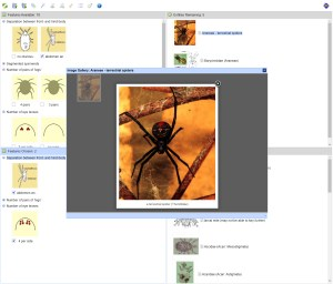 Freshwater Arachnids Spiders and Mites Lucid key taxon image gallery example