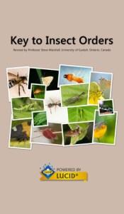 Insect Orders app splash screen