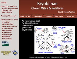 Invasive Mite Identification: Tools for Quarantine and Plant Protection - Bryobiine - Clover Mites and Relatives