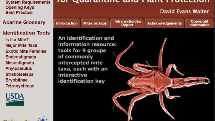 Invasive Mite Identification: Tools for Quarantine and Plant Protection - Home page