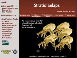 Invasive Mite Identification: Tools for Quarantine and Plant Protection - Stratiolaelaps