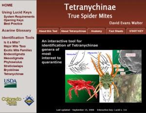 Invasive Mite Identification: Tools for Quarantine and Plant Protection - Tetranychinae True Spider Mites