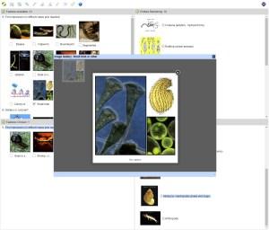 Phylum and class of Australian Aquatic Invertebrates Lucid key feature gallery example