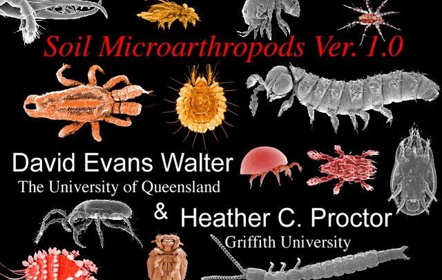 Soil Microarthropods home page