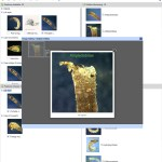 Key to Families of Australian Trichoptera Larvae Lucid key taxon image gallery example