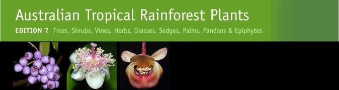 Australian Tropical Rainforest Plants banner