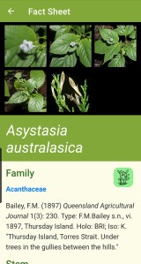 Australian Tropical Rainforest Plants Lucid key example fact sheet